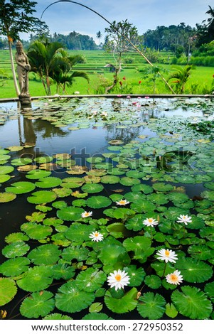 A Lilly Pond leading onto rice terraces in Bali, Indonesia - stock photo