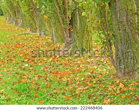 A line of trees.  - stock photo