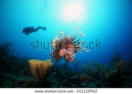 A lion fish and sponge with the silhouette of a diver a sun in the background on a coral reef - Akumal, Riviera Maya - Mexico - stock photo