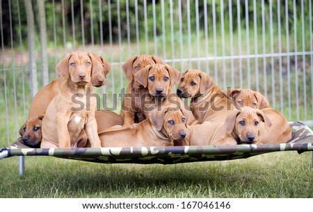 A litter of cute puppies sitting together on a hammock in garden.
