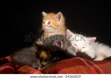 A litter of kittens resting on a red blanket with a black background