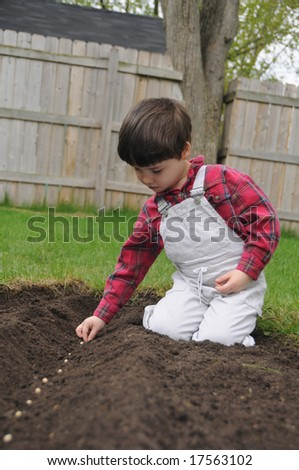 A little boy plants a row of bean seeds in a freshly dug furrow in spring - stock photo