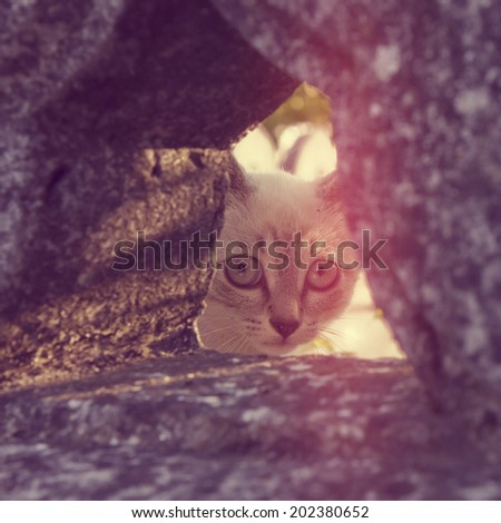 A little cat peeking out of a hole in a stone fence with a vintage retro filter  - stock photo