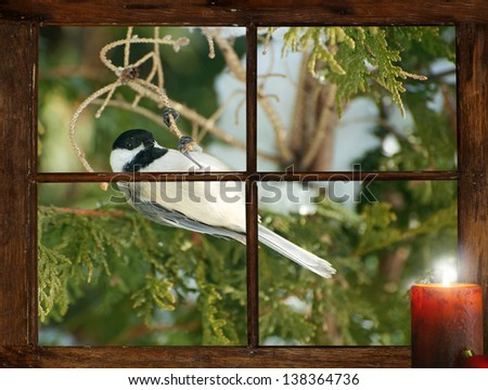 A little chickadee hanging by a branch in front of a tiny farmhouse window, curious about the glowing candle burning inside, in the winter, at Christmastime.  Part of a series. - stock photo