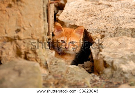 A little curious kitten peeking out of the hole under the house