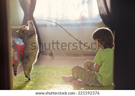 A little cute boy playing with cat dancing attendance - stock photo