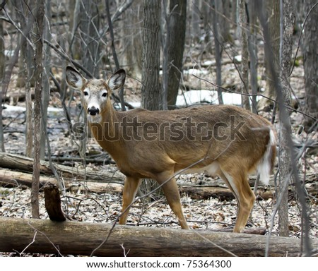 A little Deer in the forest, looking in my direction.