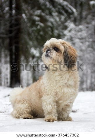 A little dog in a snowy forest