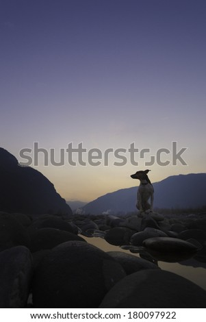 A little dog sits on a boulder in a river bed at sunset. / Dog sitting on a rock - stock photo