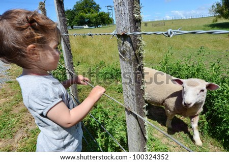 A little girl play with a lamb in a sheep farm. - stock photo