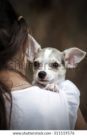A little girl with her pet chihuahua dog. - stock photo