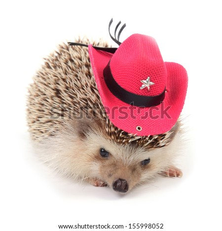 A little hedgehog is wearing a small red cowboy hat on white background. - stock photo