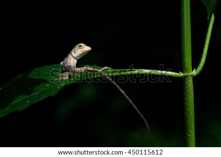 A little lizard on branches isolate on the black background.