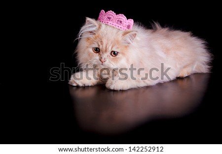 A little persian kitten cat, posing with a crown of the king (pink) on black background. Concept of lion king or queen.