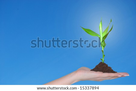 A little plant in hand like a symbol of new life - stock photo