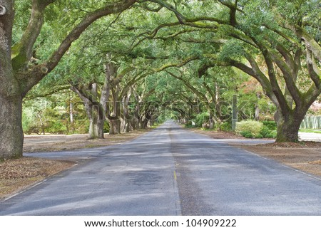 A living archway of oaks lines South Boundary Drive in Aiken, South Carolina. - stock photo