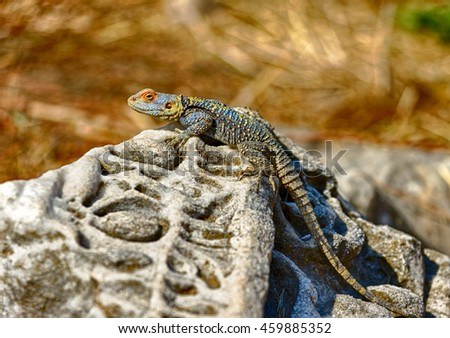 A lizard basks in the sun at the ruins of ancient library in Side, Turkey
