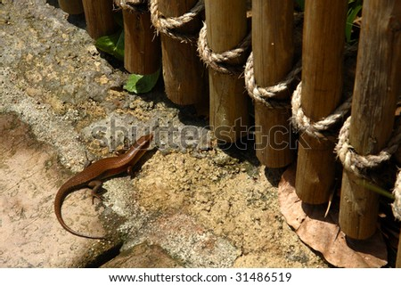 A lizard in front of a huge wooden fence.