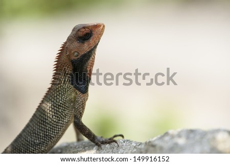 A lizard resting on the ground. - stock photo