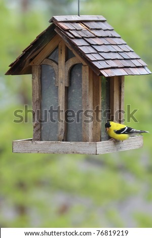 A lone goldfinch in his bright yellow plumage has this large house shaped bird feeder all to himself for the moment. - stock photo