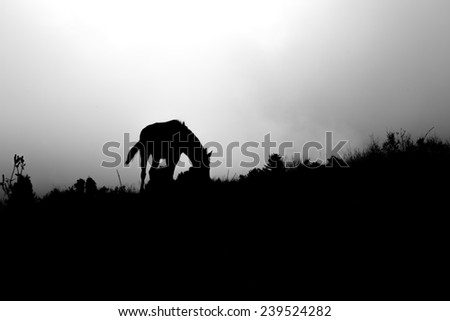 A lone horse stands on the crest of a grassy hilltop. - stock photo