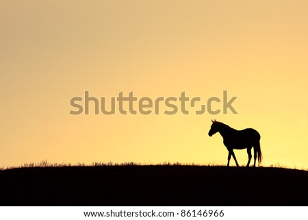 A lone horse stands on the crest of a grassy hilltop as the sun rises behind him against an orange sky.