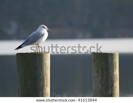 A lone seagull - stock photo