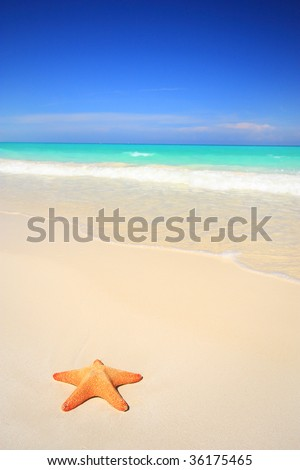 A lone starfish on stunning white sand tropical beach - stock photo