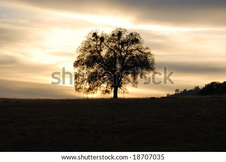 A lone tree at Sunset - stock photo