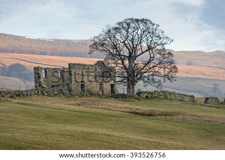A lone tree beside a ruined stone barn in the sunrise, Bishopdale the Yorkshire Dales National Park. - stock photo
