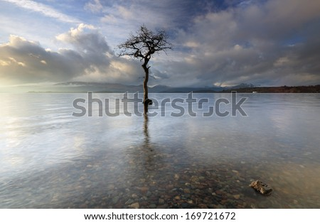 A lone tree partially submerged in the water of Loch Lomond, Scotland.  - stock photo