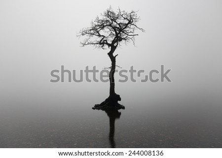 A lone tree partially submerged on a mist covered Loch at Milarrochy bay, Loch Lomond, Scotland - stock photo