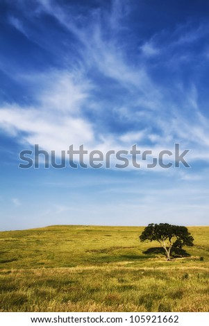 A lone tree stands on the hillside of the Flint Hills of Kansas in this vertical image. - stock photo