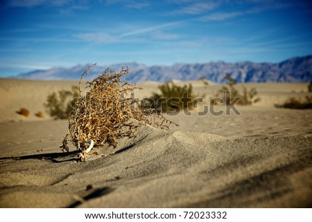 A lone tumbleweed is wedged against a ripple of sand.
