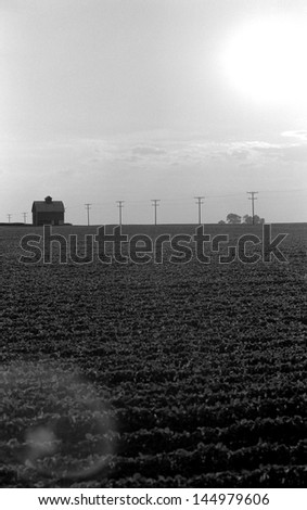 A lonely barn and telephone poles in a mid western USA farm field - stock photo