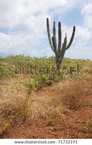 A lonely cactus on the island of Curacao. - stock photo