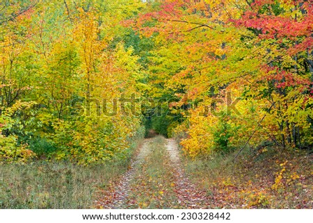 A lonely country road in Michigan's Upper Peninsula is decorated for autumn with vivid fall foliage. - stock photo