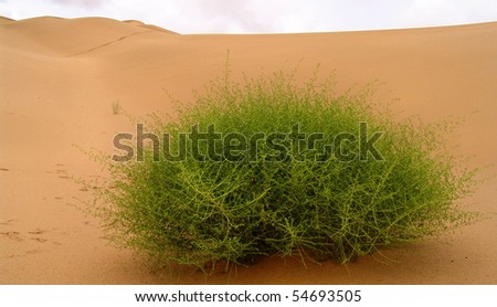 A lonely plant - stock photo