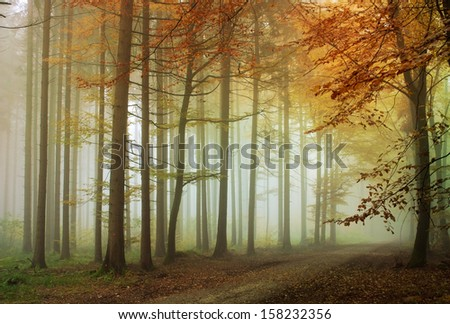 A lonely road in the forest with fog around the trees. - stock photo
