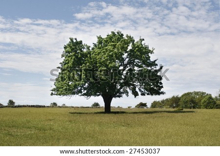 A lonely tree on a field. - stock photo