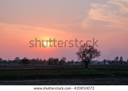 a lonely tree on sunset over agriculture farmland  - stock photo