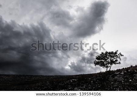 a lonely tree silhouette over a stormy and gloomy sky - stock photo