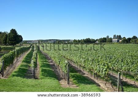 A Long Island Winery - stock photo