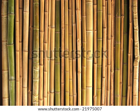 A lot of bamboo reeds - stock photo