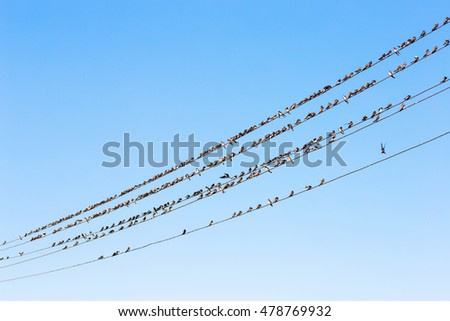 a lot of birds sitting on wires against a blue sky