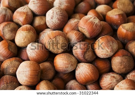 A lot of brown hazelnuts