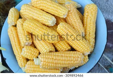 A lot of heads of ripe corn   - stock photo