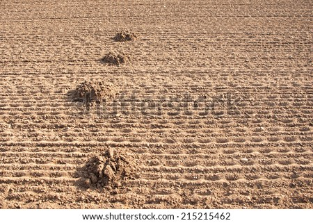 a lot of mole mound in the plowed land - stock photo