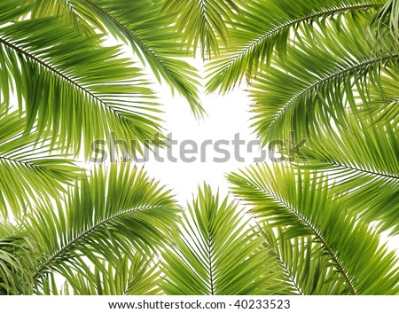 a lot of palm tree leaves on white background - stock photo