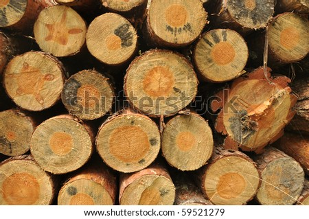 A lot of pile of wood in summer forest. - stock photo